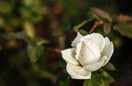 Flora-016.jpg