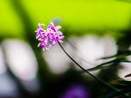 Flora-029.jpg