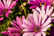 Flora-068.jpg
