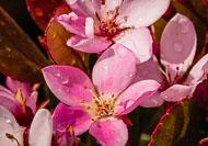 Flora-091.jpg
