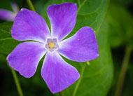 Flora-099.jpg