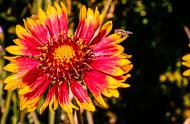 Flora-104.jpg