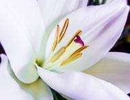 Flora-127.jpg
