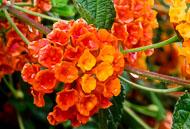 Flora-166.jpg