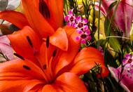 Flora-187.jpg