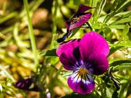 Flora-230.jpg