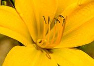 Flora-247.jpg
