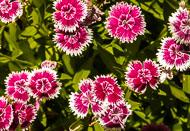 Flora-248.jpg